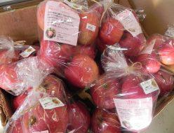 森姫農園のポケットりんご